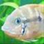 Urho3D icon